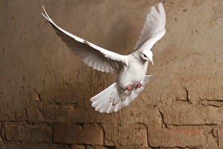 鳥に求愛される夢